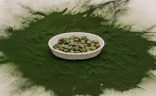 chlorella winderigheid