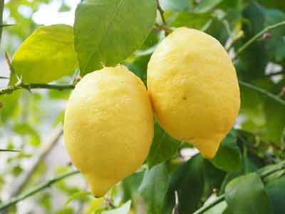 vitamine c citrus