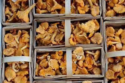 paddenstoelen vitamine d rijke voeding