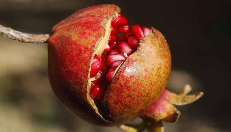 voordelen van granaatappel