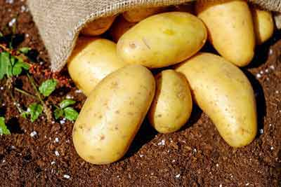 aardappelen snelle suikers
