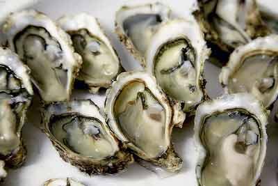 oesters zink ijzer omega 3