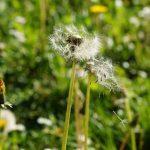 Kruiden Tegen Hooikoorts | Natuurlijke Middelen