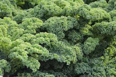 boerenkool vitamine e rijke voeding