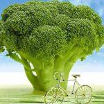 Zijn supplementen voor veganisten noodzakelijk?