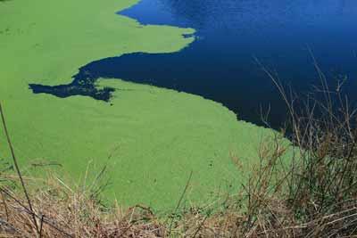 spirulina algen rivier water