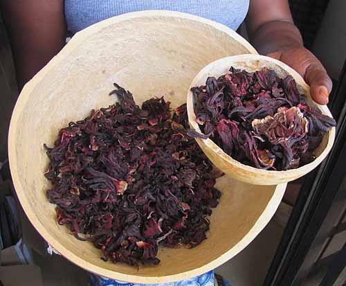 hibiscus werking