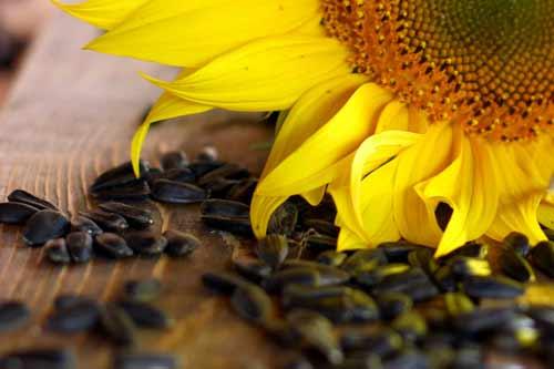 kaliumvoeding zonnebloempitten