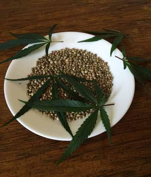 Plantaardige voeding omega 3 hennepzaad