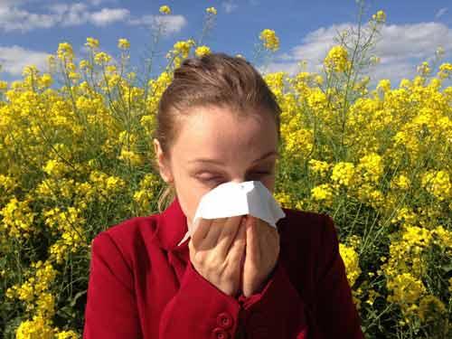 allergie brandnetelthee
