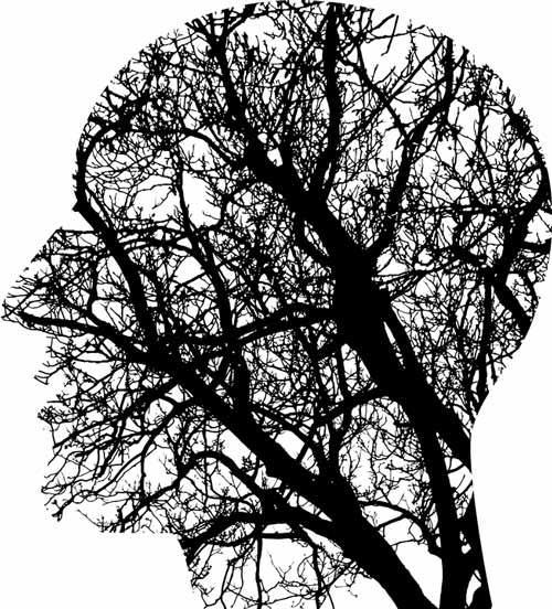 hersenen beschermen lijnzaad olie