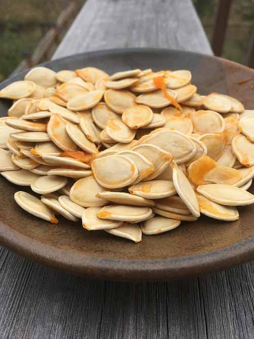 pompoenpitten lignanen voeding
