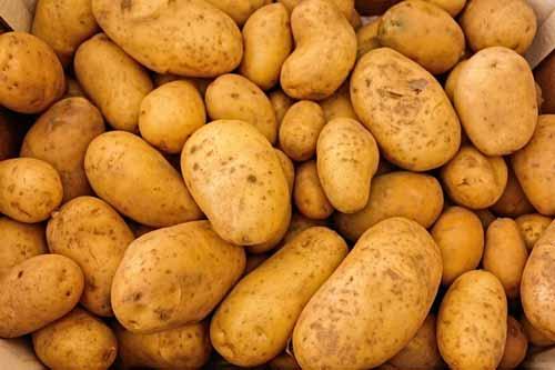 aardappelen nachtschade