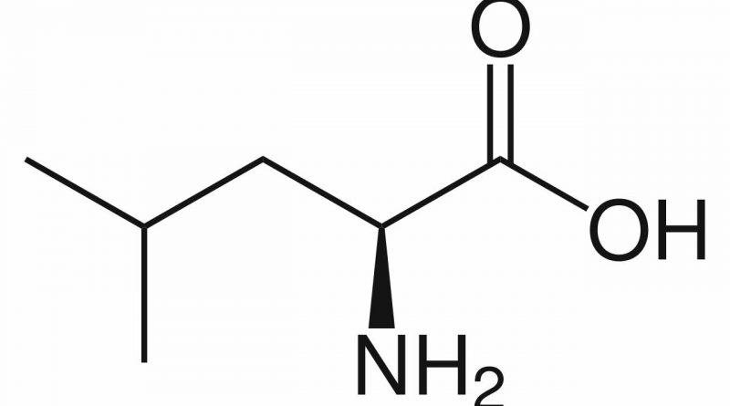 Leucine | Werking En Bijwerkingen Van Aminozuren