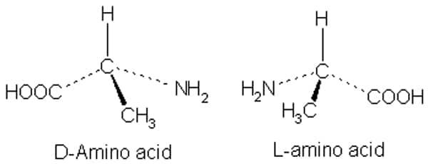 L-aminozuren D-aminozuren