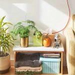 Welke zijn de 10 belangrijkste luchtzuiverende planten?