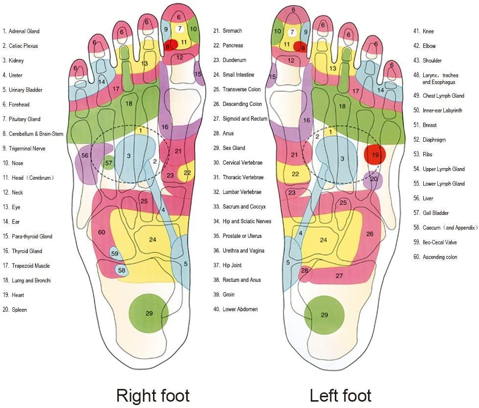 acupressuur slippers per orgaan